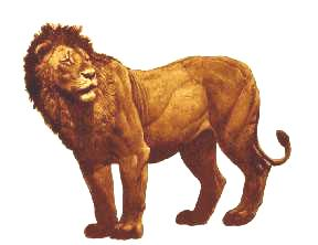 The American Lion, now extinct, were among the first lions on earth
