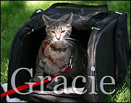 Gracie in her cat walking jacket, a unique soft sided security harness especially for cats and kittens of all sizes!