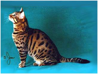 Gogees Maverick of Foothill Felines, an F5 Bengal stud