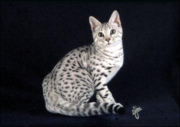 red eyes cat