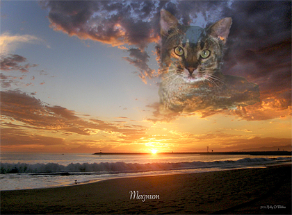 Breathtaking, custom photographic 