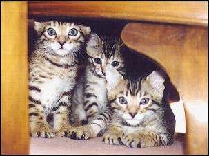 Kittens will explore every nook and cranny of your home!