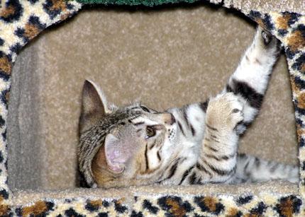 ringworm spots on cats